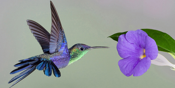 Google's Hummingbird Algorithm & What It Means for Your Marketing
